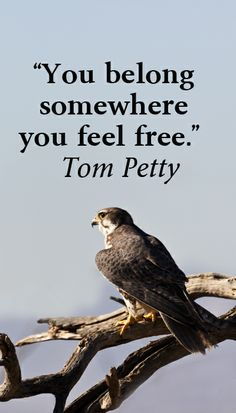 "Tom Petty Quote ""Freedom"""